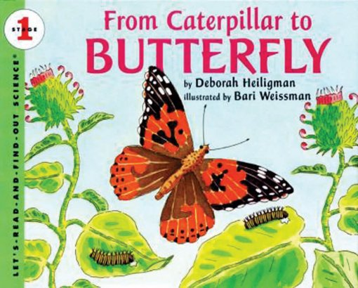 From-Caterpillar-to-Butterfly