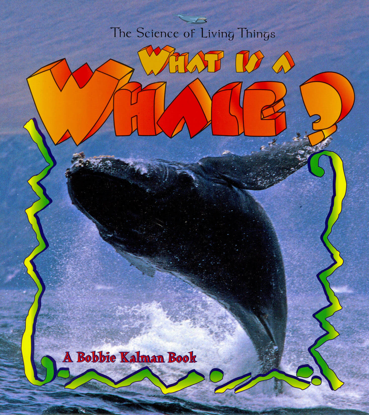 What is a whale