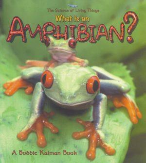what is an amphibian